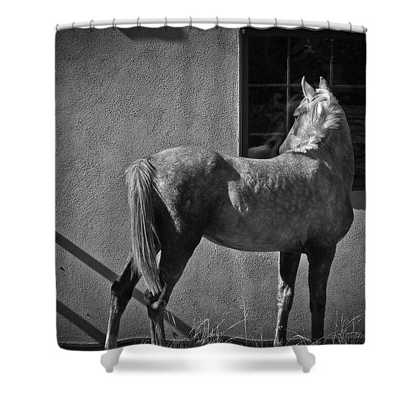 Shower Curtain featuring the photograph Light And Shadow by Catherine Sobredo