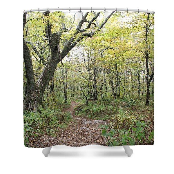 Light On Path Shower Curtain