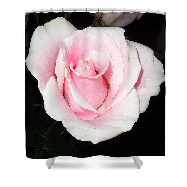 Light Pink Rose Shower Curtain