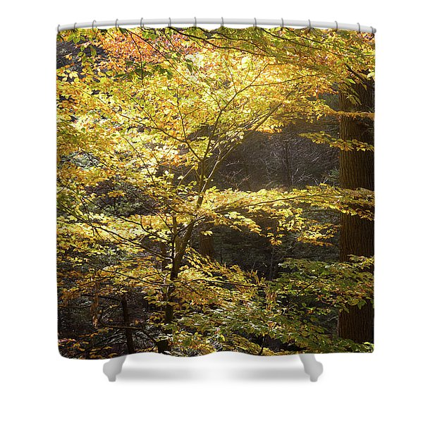 Light In The Leaves Shower Curtain