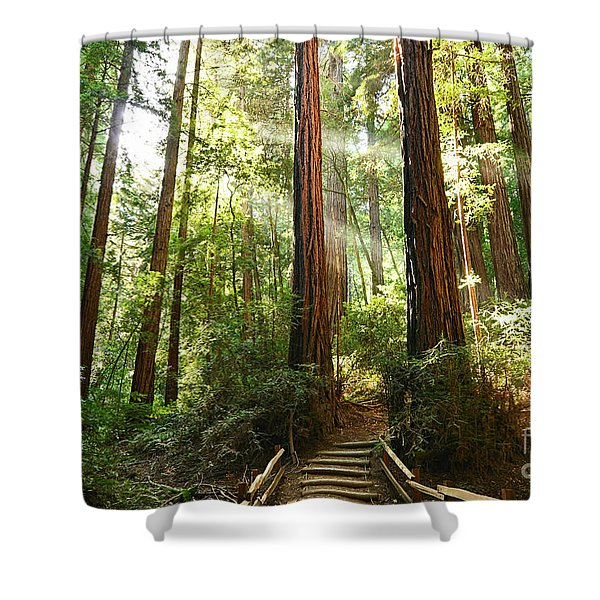 Light The Way - Redwood Forest Of Muir Woods National Monument With Sun Beam. Shower Curtain