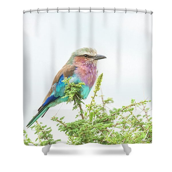 Lilac Breasted Roller. Shower Curtain