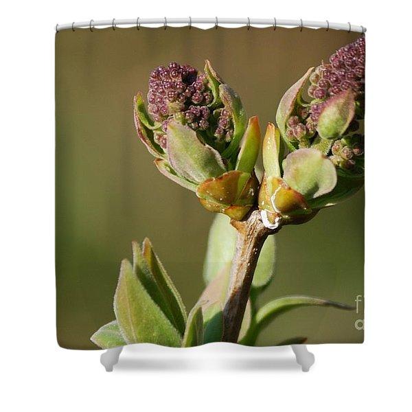 Lilac Bud Shower Curtain