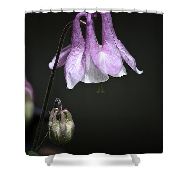 Lilac Columbine 2 Shower Curtain