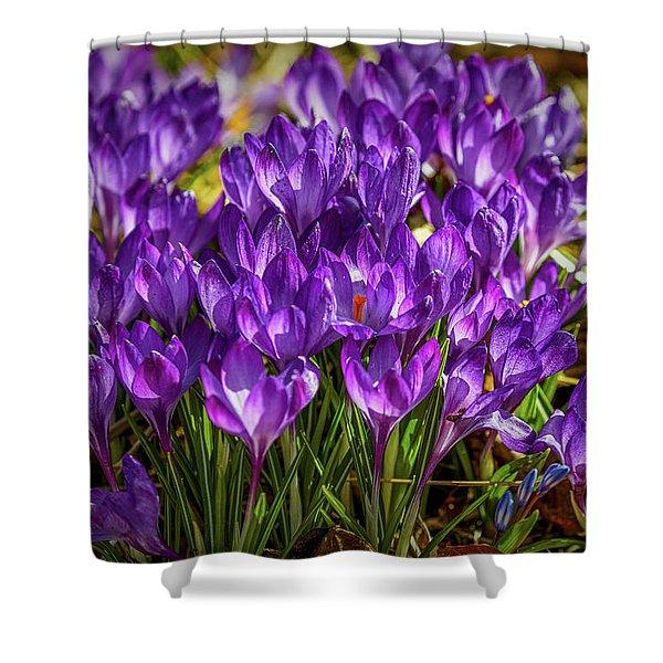 Lilac Crocus #g2 Shower Curtain
