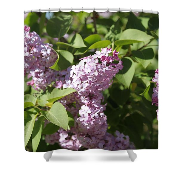 Shower Curtain featuring the photograph Lilacs 5544 by Antonio Romero