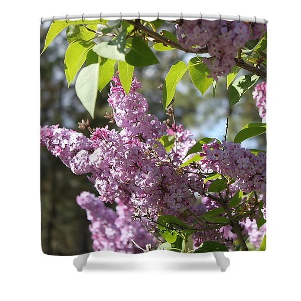 Shower Curtain featuring the photograph Lilacs 5545 by Antonio Romero