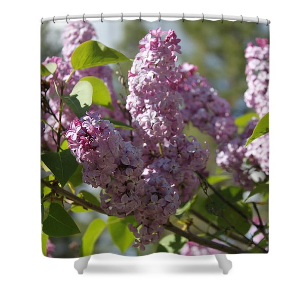 Shower Curtain featuring the photograph Lilacs 5548 by Antonio Romero