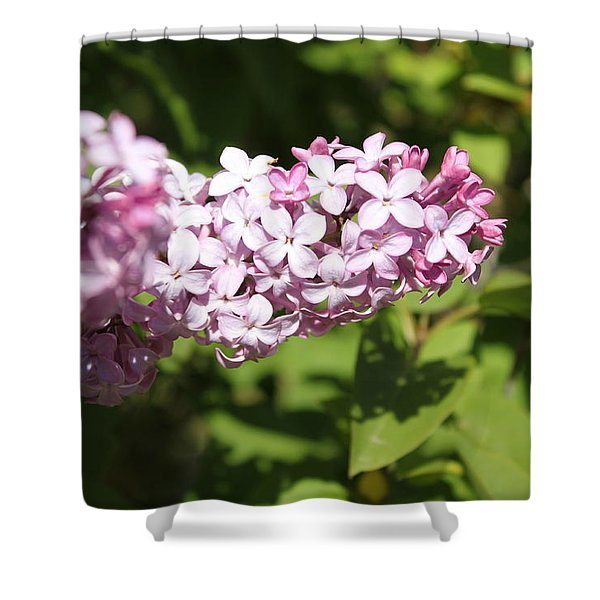 Shower Curtain featuring the photograph Lilacs 5550 by Antonio Romero