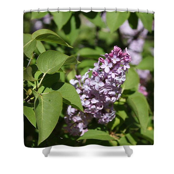 Shower Curtain featuring the photograph Lilacs 5551 by Antonio Romero