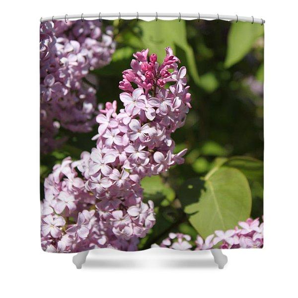Lilacs 5552 Shower Curtain