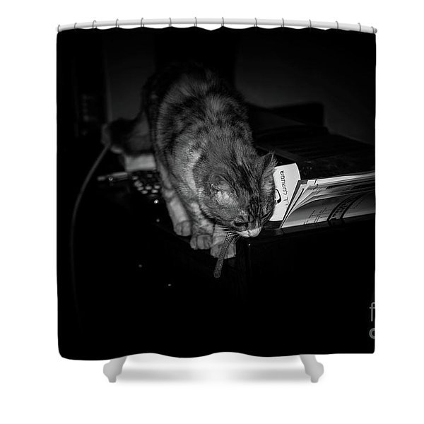 Shower Curtain featuring the photograph Lili At Night Activity by Arik Baltinester