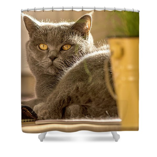 Lilli The Cat Shower Curtain