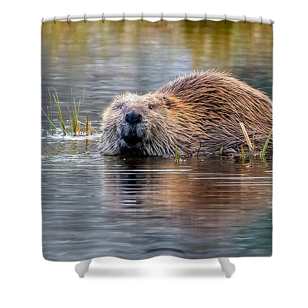 Lily Lake Beaver Shower Curtain
