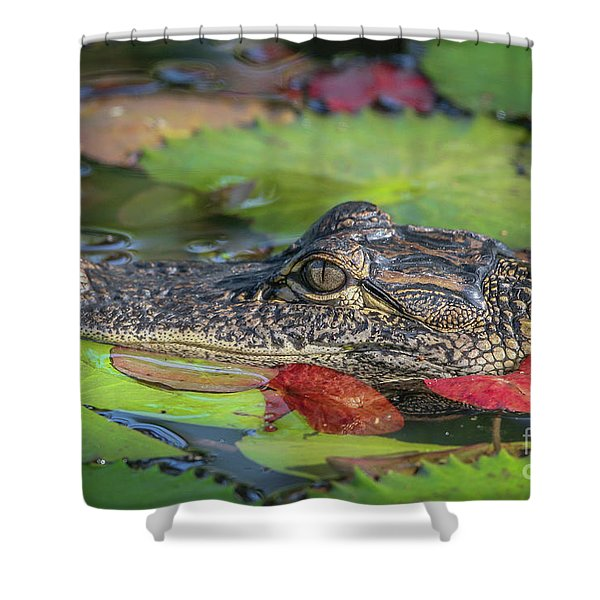 Shower Curtain featuring the photograph Lily Pad Gator by Tom Claud