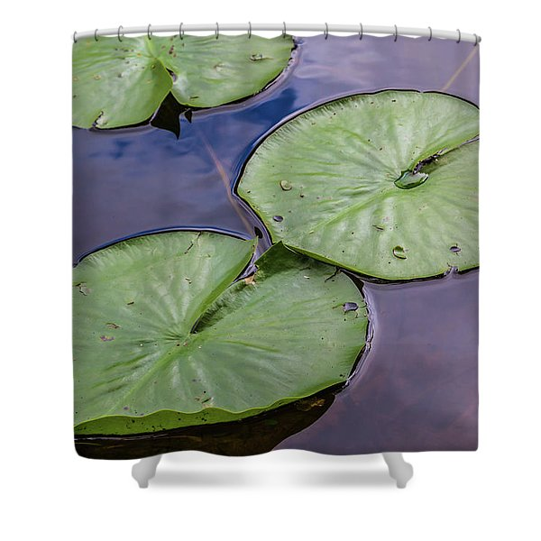 Lily Pad Reflections Shower Curtain