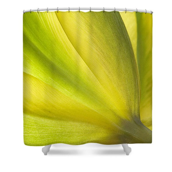 Lime Tulip Shower Curtain