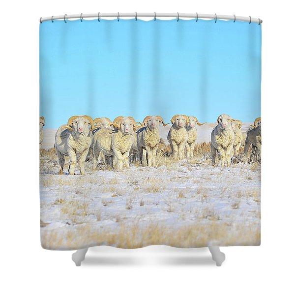 Line Em Up Rams Shower Curtain