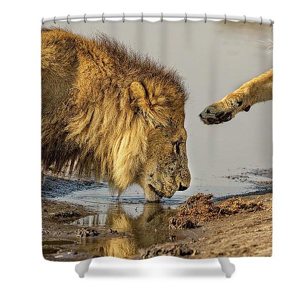 Lion Affection Shower Curtain