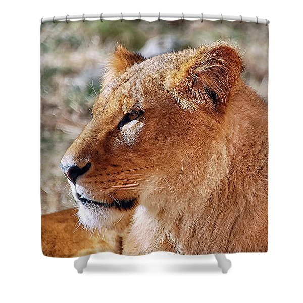 Lion Around Shower Curtain