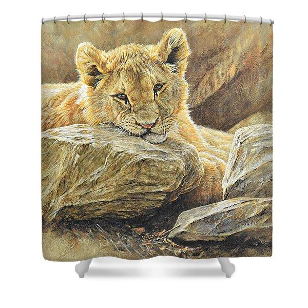 Lion Cub Study Shower Curtain