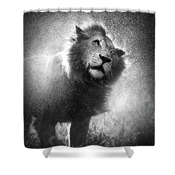 Lion Shaking Off Water Shower Curtain