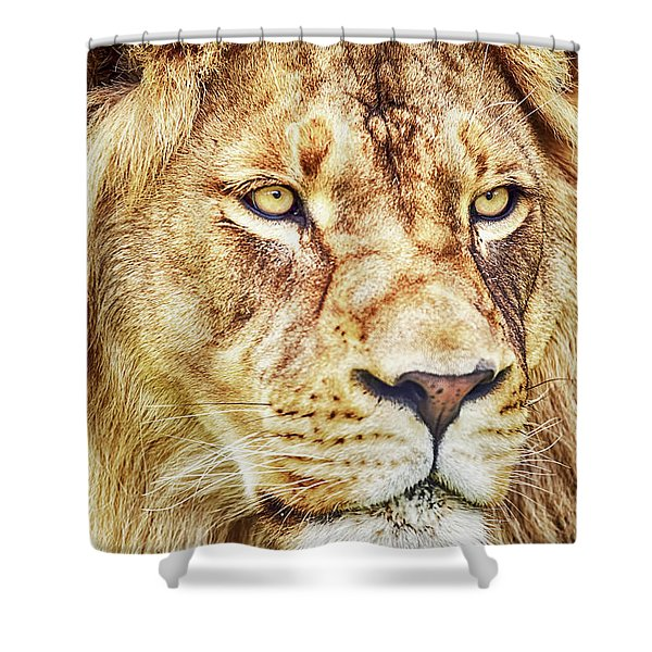 Shower Curtain featuring the photograph Lion Is The King Of The Jungle by David Millenheft