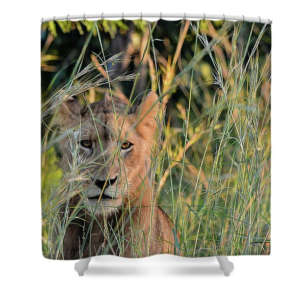 Lion Warily Watching Shower Curtain