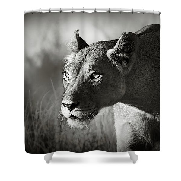 Lioness Stalking Shower Curtain