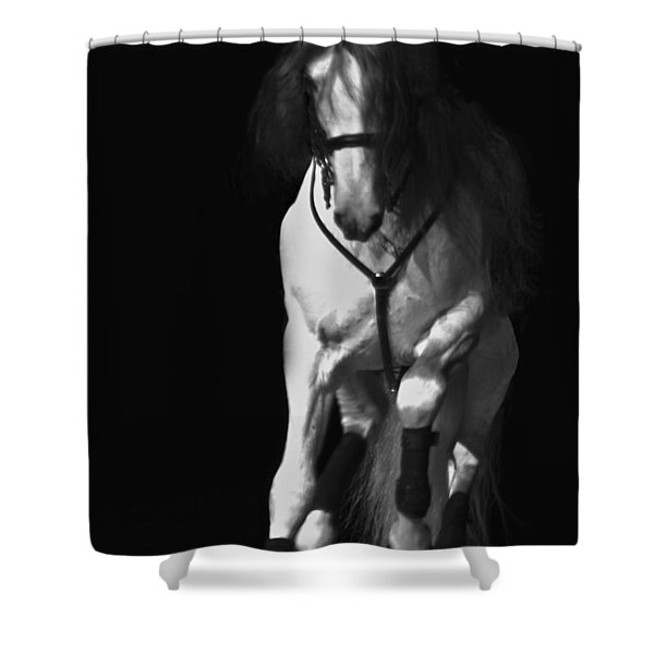 Lipizzan 1 Shower Curtain