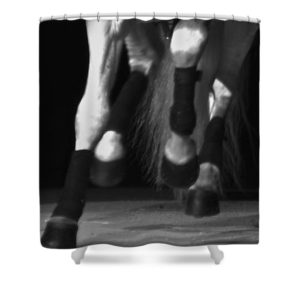 Shower Curtain featuring the photograph Lipizzan 1 by Catherine Sobredo
