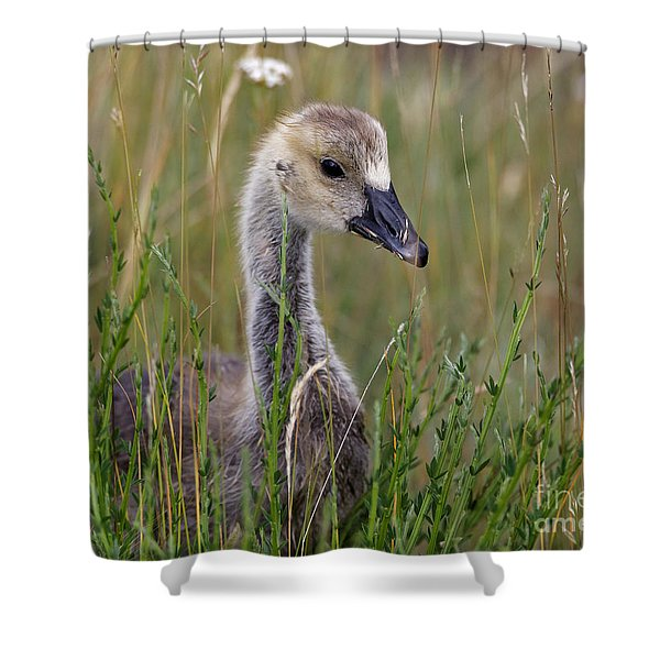 Little Baby Delight Shower Curtain
