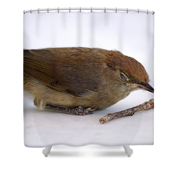 Little Bird  Shower Curtain