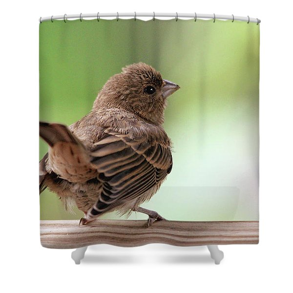 Little Bird Shower Curtain