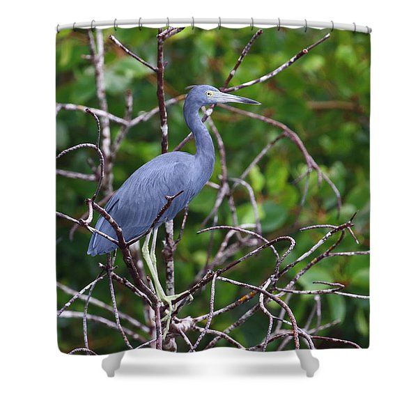 Little Blue At Trinidad's Caroni Swamp Shower Curtain