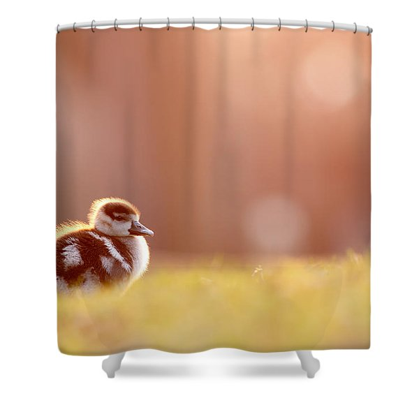 Little Furry Animal - Gosling In Warm Light Shower Curtain