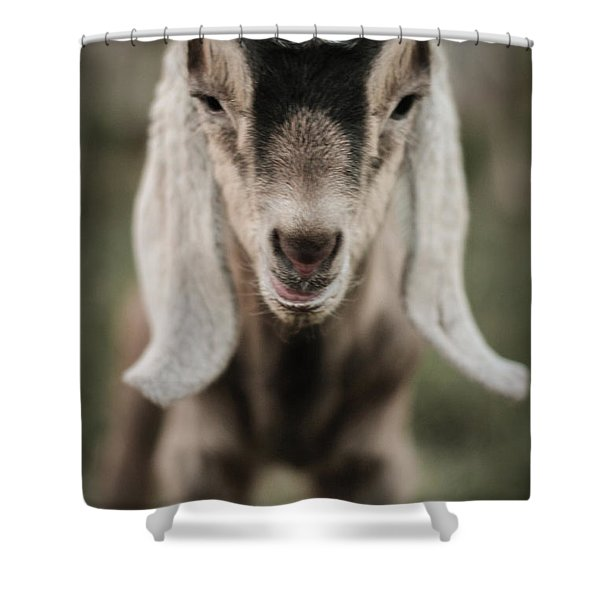 Little Goat In Color Shower Curtain