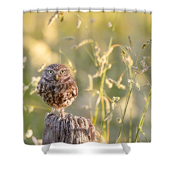 Little Owl Big World Shower Curtain