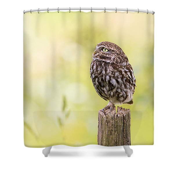Little Owl Looking Up Shower Curtain