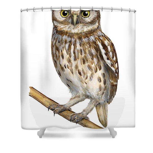 Little Owl Or Minerva's Owl Athene Noctua - Goddess Of Wisdom- Chouette Cheveche- Nationalpark Eifel Shower Curtain