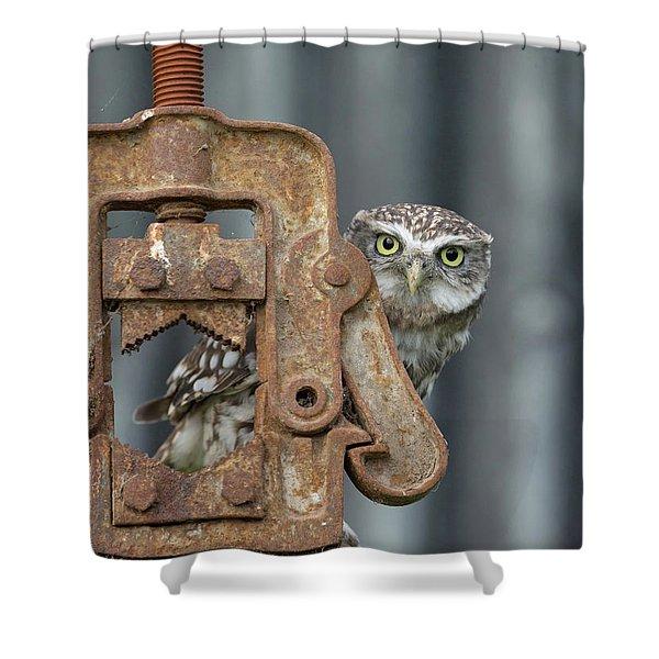 Little Owl Peeking Shower Curtain