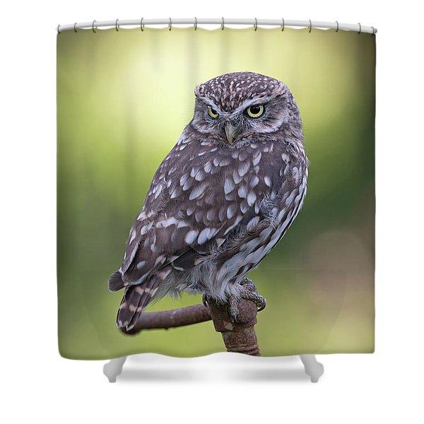 Little Owl Pipe Bender Shower Curtain