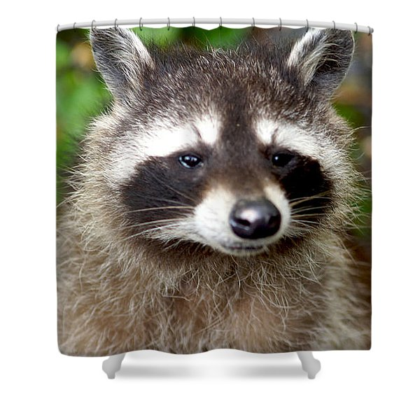 Little Racoon - Procyon Lotor Shower Curtain