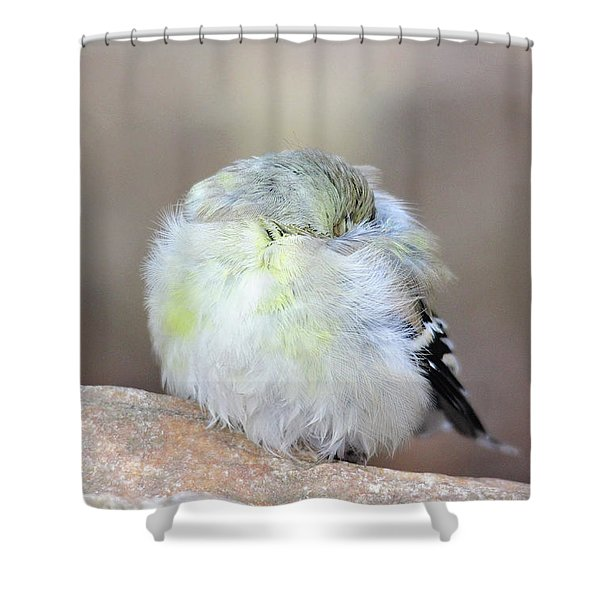 Little Sleeping Goldfinch Shower Curtain
