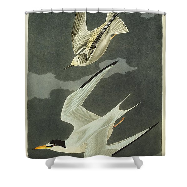 Little Tern Shower Curtain