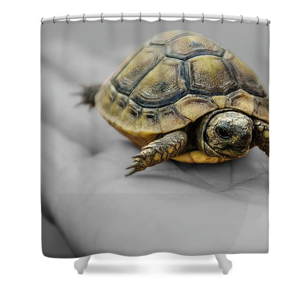 Little Turtle Baby Shower Curtain