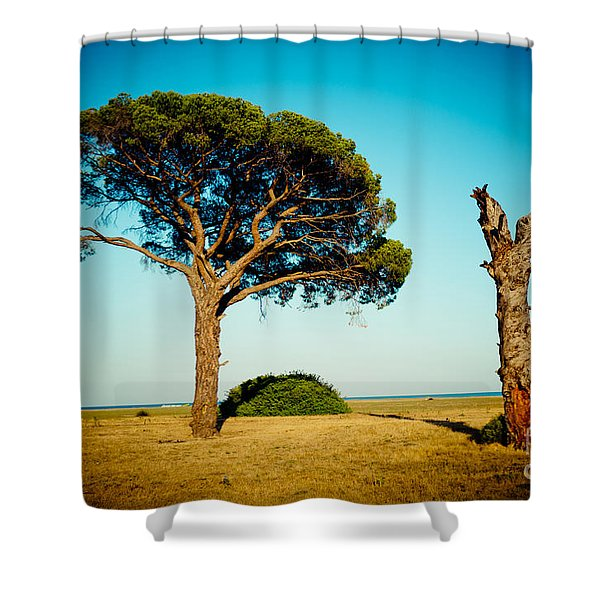 Live And Dead Tree At Seacoast Shower Curtain