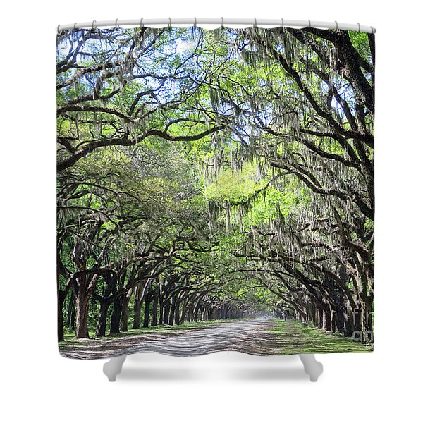 Live Oak Canopy Shower Curtain