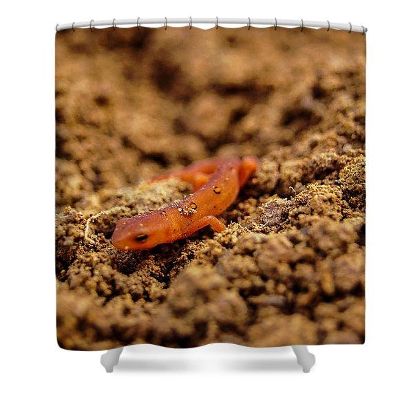 Lizard In Dirt Shower Curtain