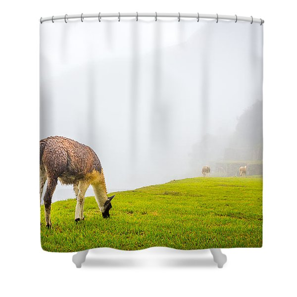 Llama  Shower Curtain